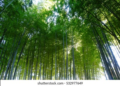 Bamboo forest, Tokyo, Japan