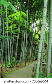 bamboo forest and walking path