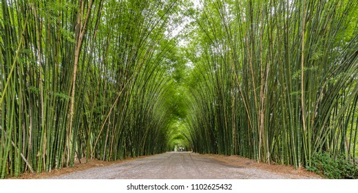 Bamboo forest at Wat Chulapornwanaram, Bamboo arch on both side for walking through the tample at Nakhon Nayok, Thailand, Natural Background.
