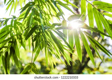 Bamboo forest,green nature background