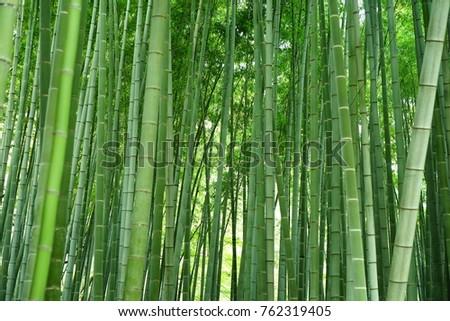 https://image.shutterstock.com/image-photo/bamboo-garden-450w-762319405.jpg