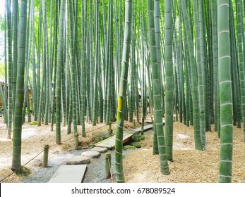 Bamboo garden of Hokokuji Temple in Kamakura City, Japan