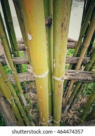 Bamboo in garden style vintage tone.