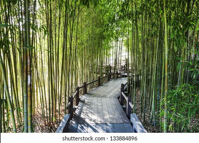 A Bamboo Garden with a Wooden Walkway