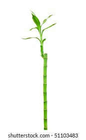 Bamboo with green leaf isolated on white background