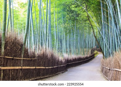 The Bamboo Grove in Arashiyama for adv or others purpose use
