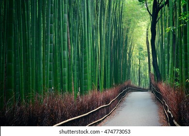 Bamboo Grove in Arashiyama, Kyoto, Japan.