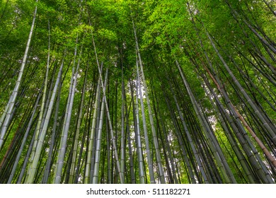 bamboo grove bamboo forest walking path with warm light effect at Arashiyama, Kyoto - Japan.