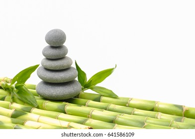 bamboo grove with leaf on gray stacked stones