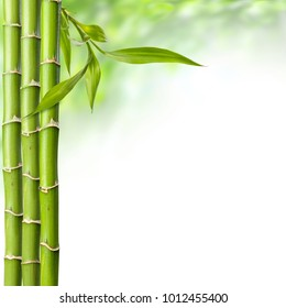 bamboo grove with leaves on the white