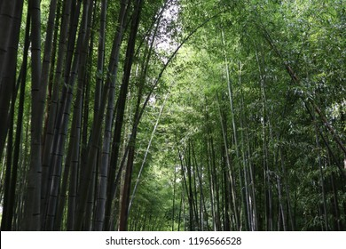 Bamboo grove path