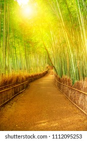 Bamboo grove at Sagano in Arashiyama in sunlit. The forest is Kyoto's second most popular tourist destination and among the 100 phonetic stations in Japan. Meditative listening concept. Vertical shot.