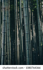 The bamboo groves in Enkoji Temple, Kyoto, Japan. Light from sunshine.
