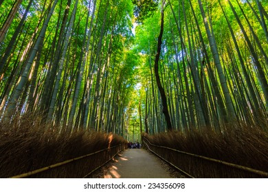 Bamboo Groves, bamboo forest at Arashiyama, kyoto Japan.