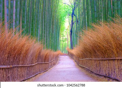 Bamboo groves public park at Arashiyama in Japan