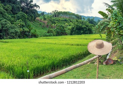 A bamboo hat with landscape view of terraced rice field in northern of Thailand