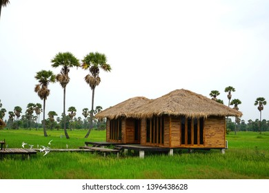 Bamboo hut in the middle of the field. There is a green rice plant in the field. Around the house there are palm trees. The house has a wooden bridge. There are birds flying over the bridge.