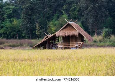 bamboo hut in rice paddy field