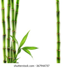 Bamboo isolated on white background. Clipping Path