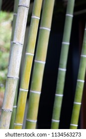 Bamboo in Japanese Buddhist temple in Kamakura, Japan