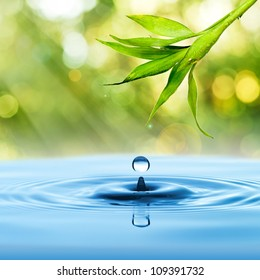 Bamboo leaf, fresh, with water drop on blue water and summer background