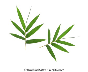 Bamboo leaf green isolated on white background