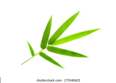 Bamboo leaf isolate on white