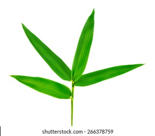 A Bamboo leaf isolate on white background.