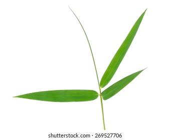 Bamboo leaf isolate on white background.