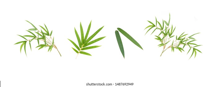 Bamboo leaf isolated on white background, Bamboo leaf texture as background or wallpaper, Chinese bamboo leaf, Collection or set of green bamboo leaves