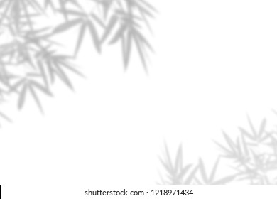 Bamboo leaf shadow on white wall Background. Blank copy space.