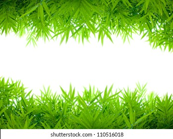 bamboo leafs on white background