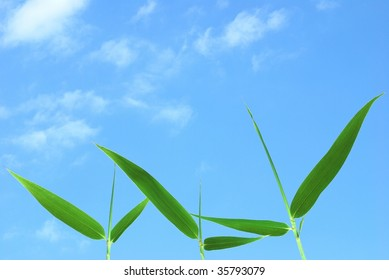 Bamboo leaves against the blue sky with cloud