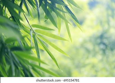 bamboo leaves background