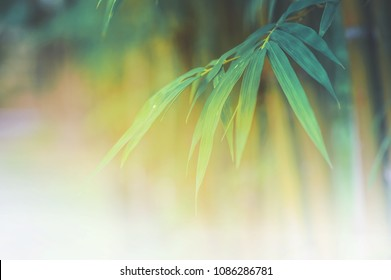 bamboo leaves or bamboo forest ,abstract background