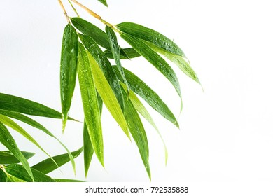 Bamboo leaves / fresh green leaves background poster on white background