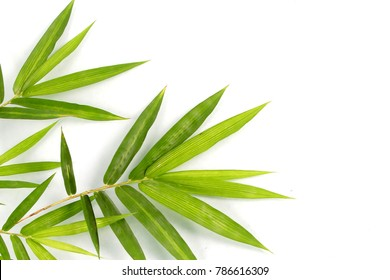 Bamboo leaves are green