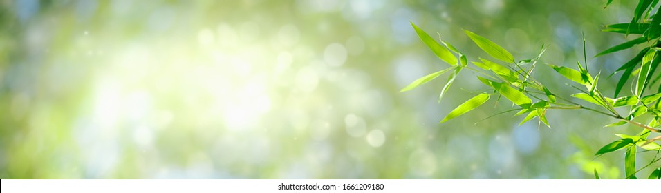 Bamboo leaves, Green leaf on bokeh blurred greenery background. Beautiful leaf texture in sunlight. Natural background. close-up of macro with free space for text.