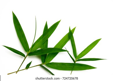 Bamboo leaves isolated on white background
