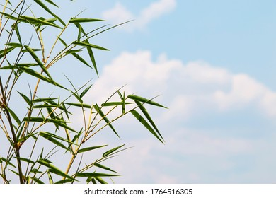 Bamboo leaves on a bright blue sky background with soft white clouds