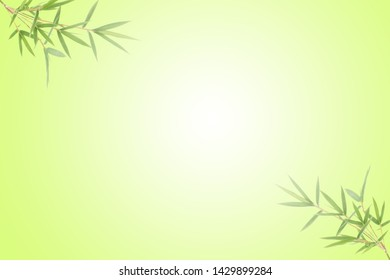 Bamboo leaves on green background with copy space, Green bamboo leaf as background or wallpaper