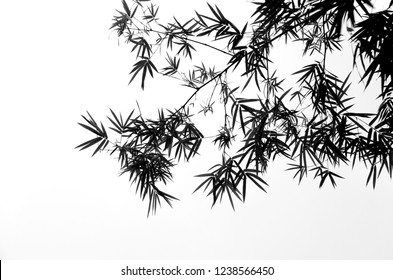 Bamboo leaves on a white background, which is a black and white portrait.