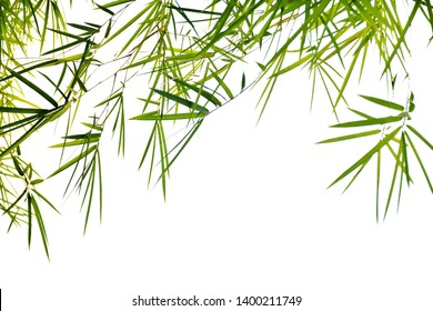 Bamboo leaves on white for background