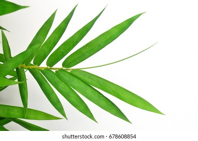 bamboo leaves on White background texture.beautiful surface