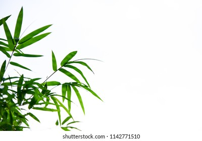 bamboo leaves on White background,Copy space.