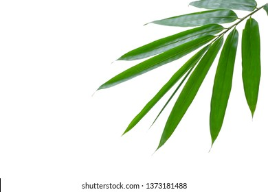 Bamboo leaves white background