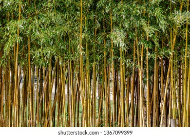 Bamboo in nature