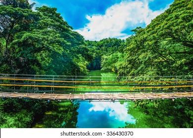 Bamboo pedestrian suspension bridge over river in jungle, Bohol, Philippines