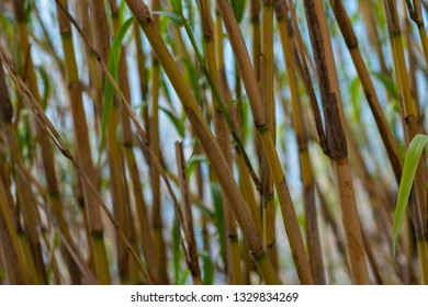 Bamboo Plant in Nature