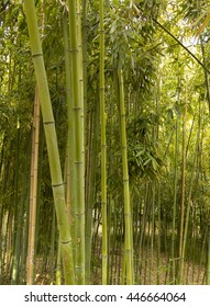 Bamboo plants and stems in a park